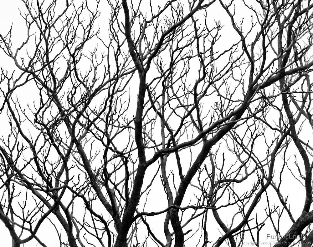 Tangled Winter Branches 1 by FuriousEnnui
