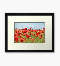 Field with red papavers Framed Print
