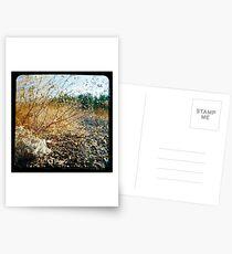 35 Degrees C Postcards