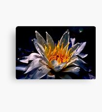 Beautiful water Lily Canvas Print