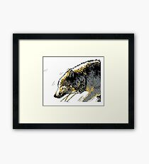 Timber Wolf Walking in the Snow Framed Print