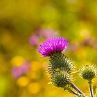 Prickly Beauty II by Veikko  Suikkanen