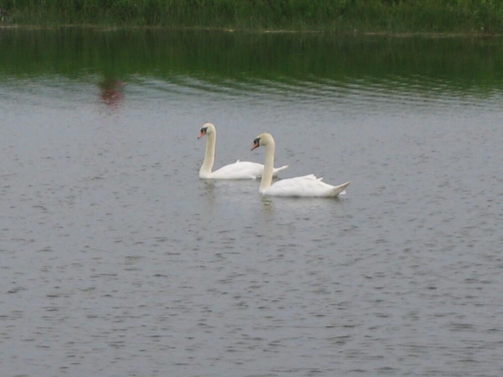 Swan Lake by xxLizziexx