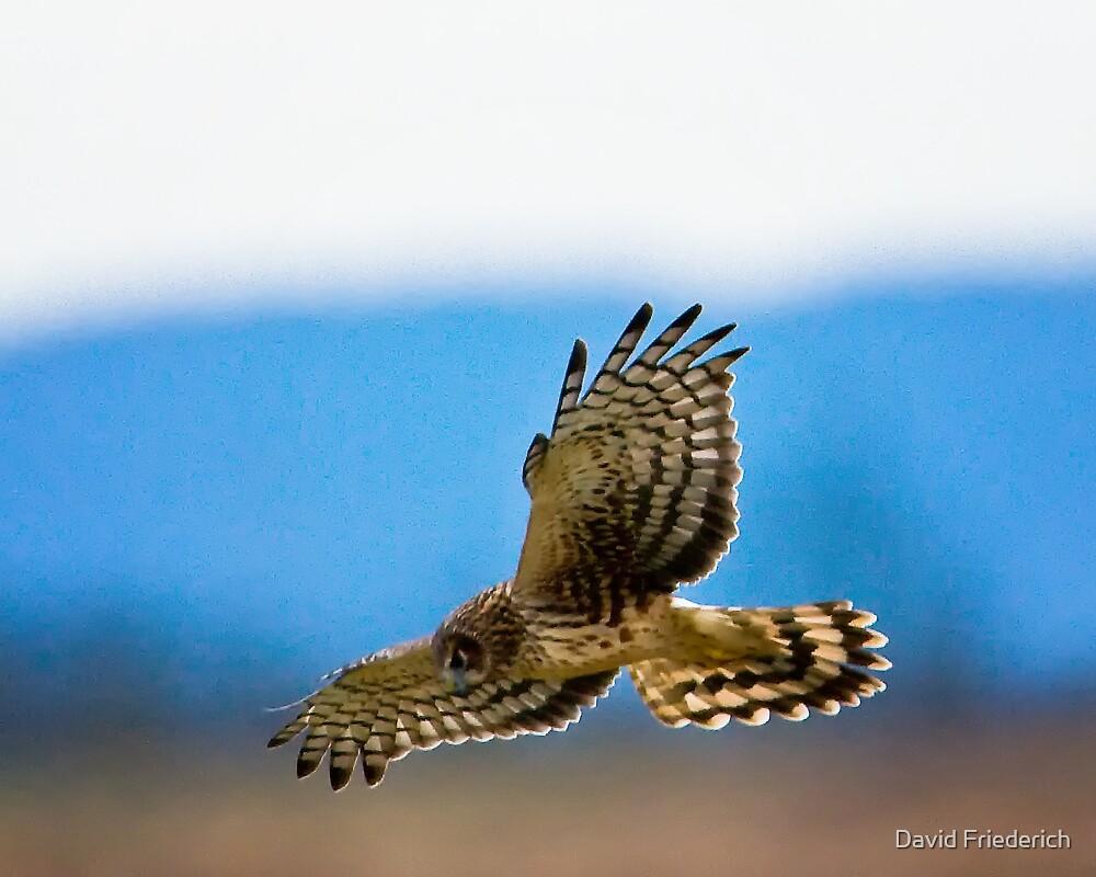 Raptor in the Sky by David Friederich