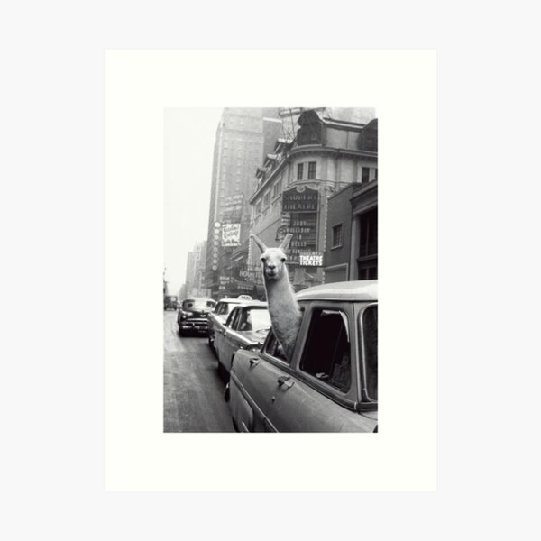 New York Lama Kunstdruck