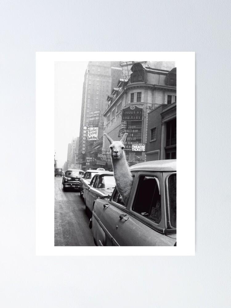 Alternate view of New York Llama Poster