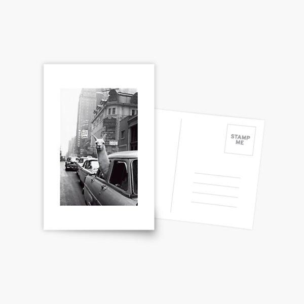 New York Llama Postcard