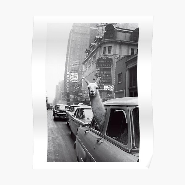 New York Llama Poster