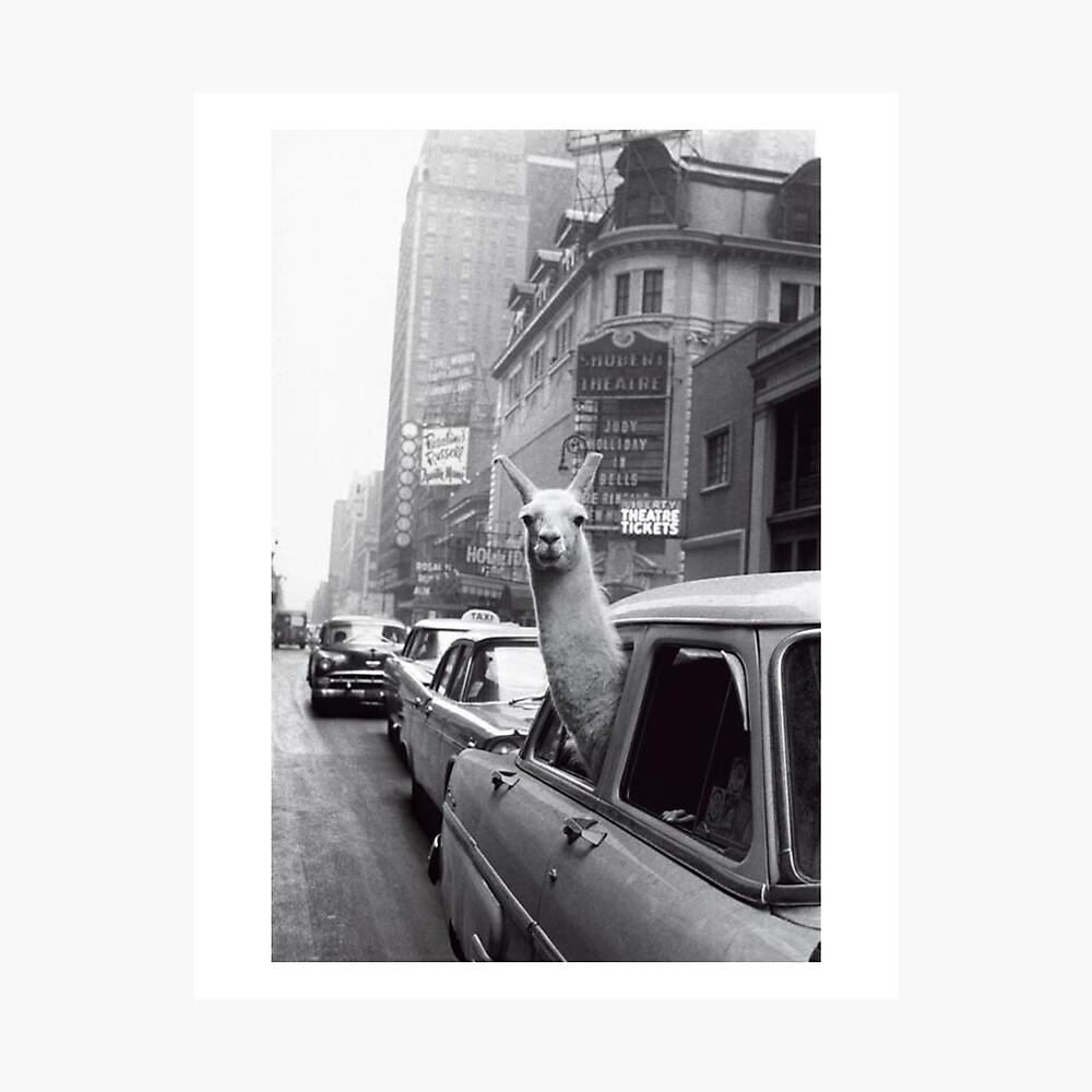 Nueva York Llama Lámina fotográfica