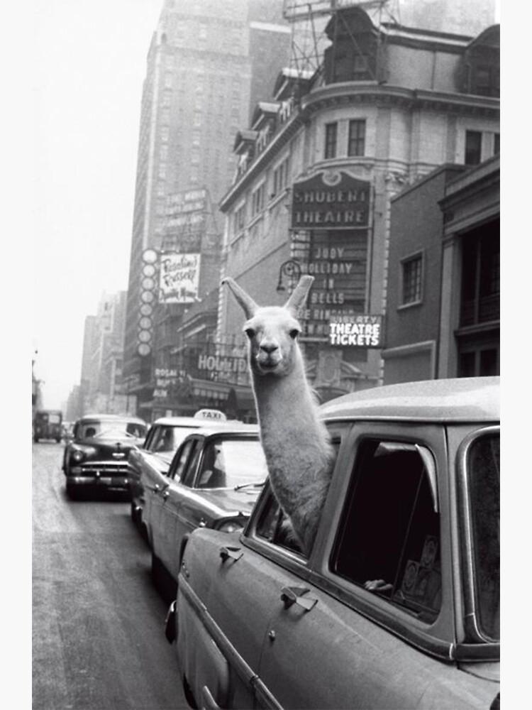 New York Llama by ToastCrumbs