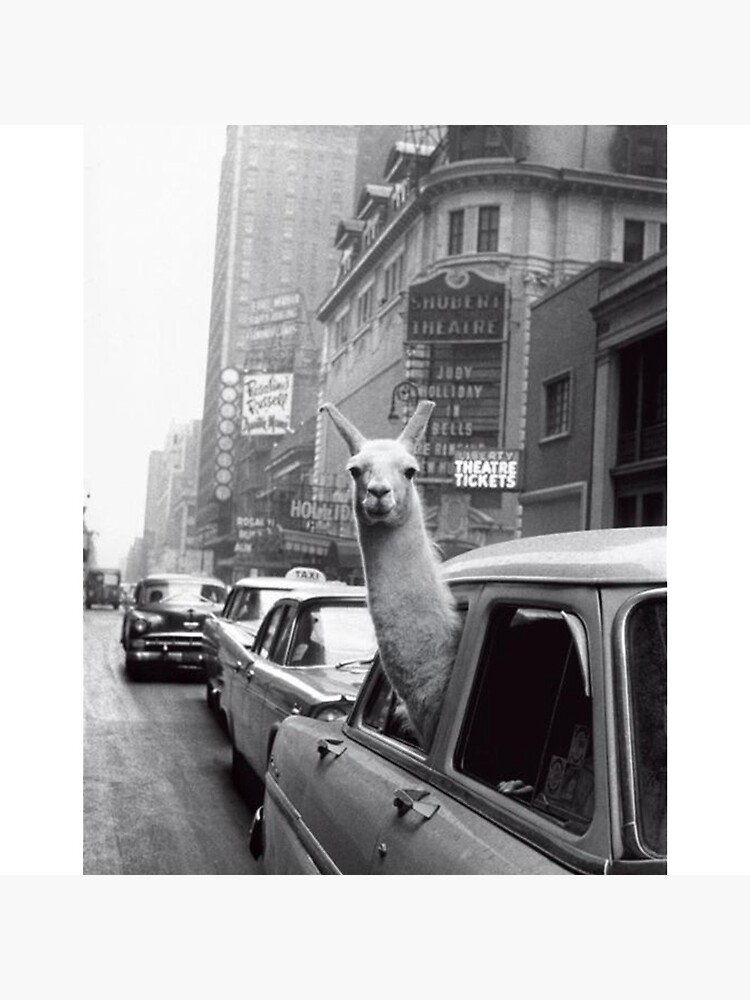 New York Llama by ToastCrumbs