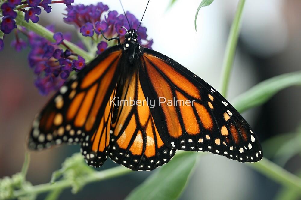 Monarch by Kimberly Palmer