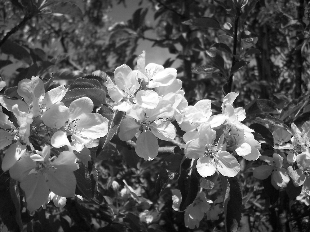 b&w flowers by Jessica Leavitt