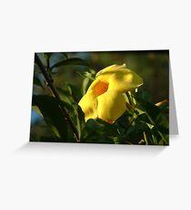 yellow allamanda Greeting Card