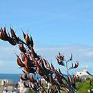 New Zealand Flax .....Lyme.Dorset UK by lynn carter