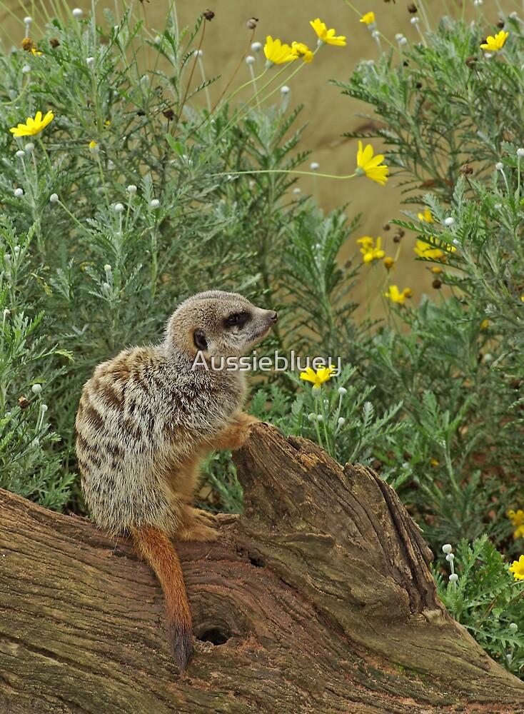 Meerkat. by Aussiebluey