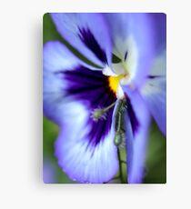 The Colour of Violet Canvas Print