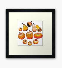Graphic collection of pumpkins Framed Print