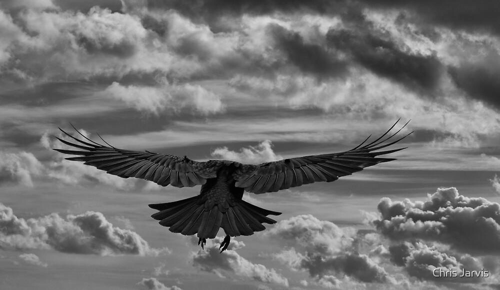 Flight by Chris Jarvis