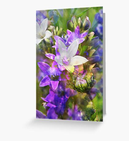 field flowers collage Greeting Card