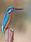 kingfisher 7 by Alan Forder
