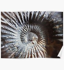 Ammonite Spiral// Nature // Fossil // Photography Poster