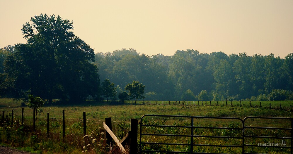 Mid Summer Pasture by madman4