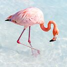 Pink Flamingo, Blue Ocean by Southern  Departure