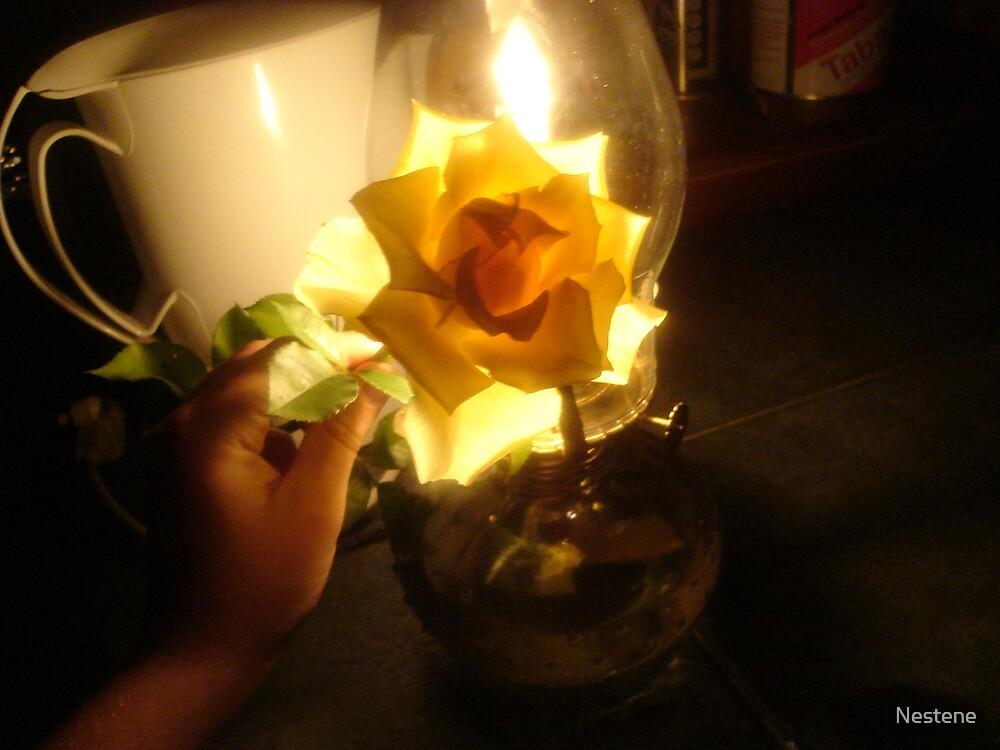 Burning rose by Nestene