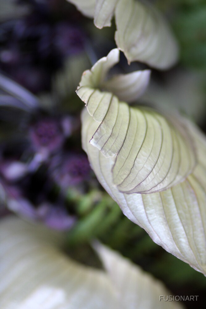 tropical bat flower by FUSIONART