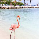 Flamingo Beach by Southern  Departure