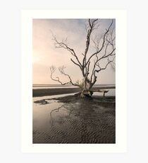 Understated at Beachmere   Art Print