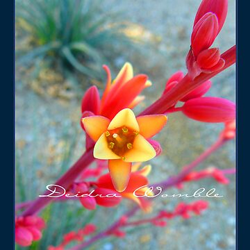 Arizona beauty 2 by DeidraWomble