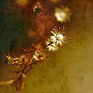 the old flower by deirdre butler derby