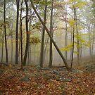 Misty Woods by Lauren Glover