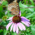 Moth Food by Lauren Glover