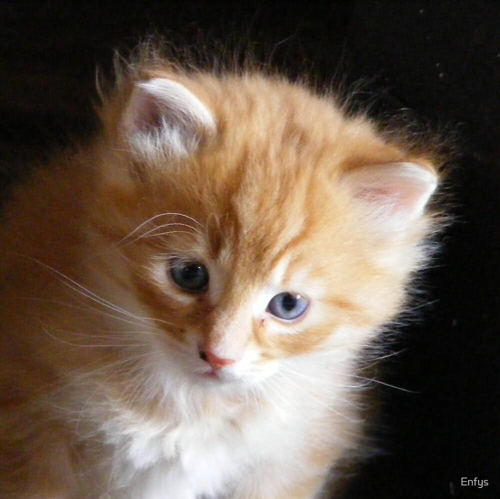 Ginger kitten by Enfys
