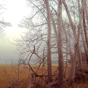 Ash trees and mist  by rozmcq