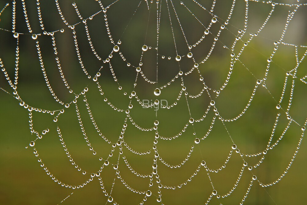 Lines of Pearls by BigD