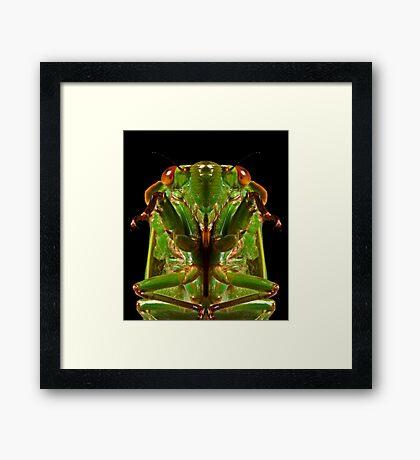 Greengrocer X Framed Print