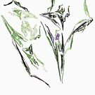 PURPLE and YELLOW IRIS in GRASS by Dayonda
