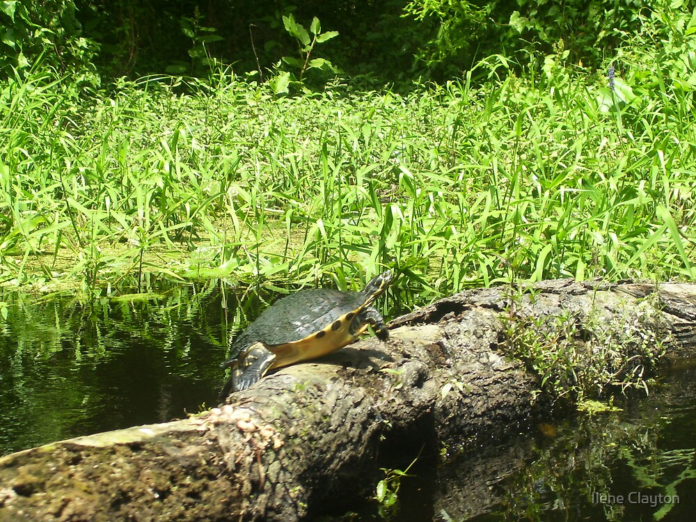 Turtle Teeter by Ilene Clayton