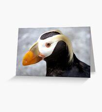 puffin bird Greeting Card