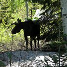 Moose by Dylan & Sarah Mazziotti