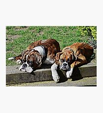 Pair of Boxers Photographic Print