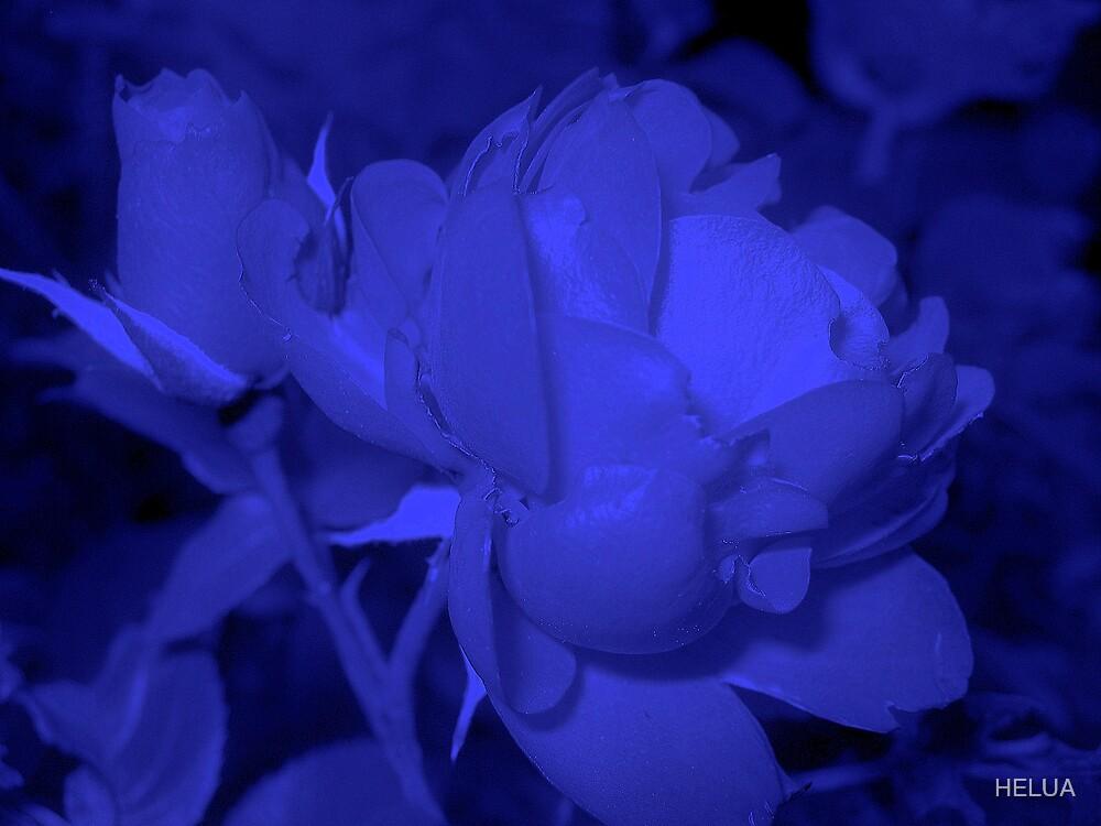 Blue Rose by HELUA