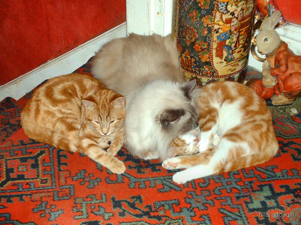 Ranee being mother to the kittens  by hilarydougill