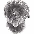 big hair dog drawing by Mike Theuer
