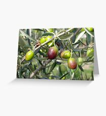 Ripening Olives Greeting Card