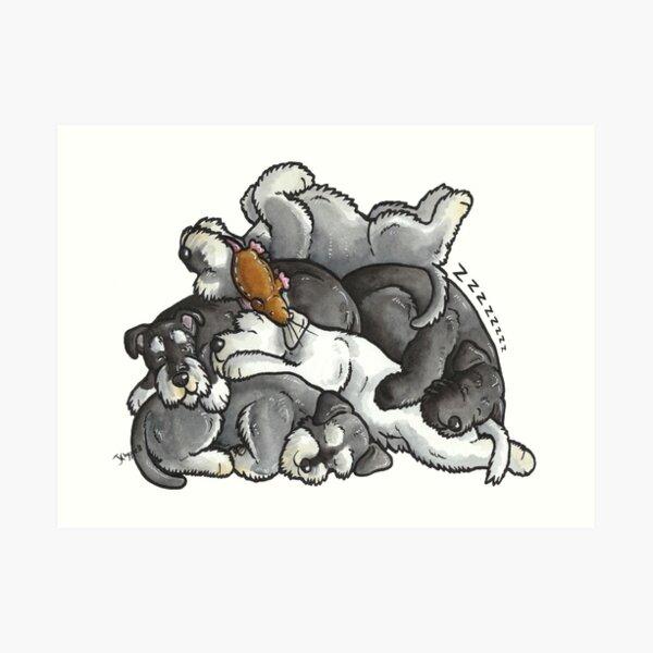Miniature Schnauzer - sleeping pile Art Print
